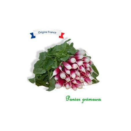 Radis rose (la botte)