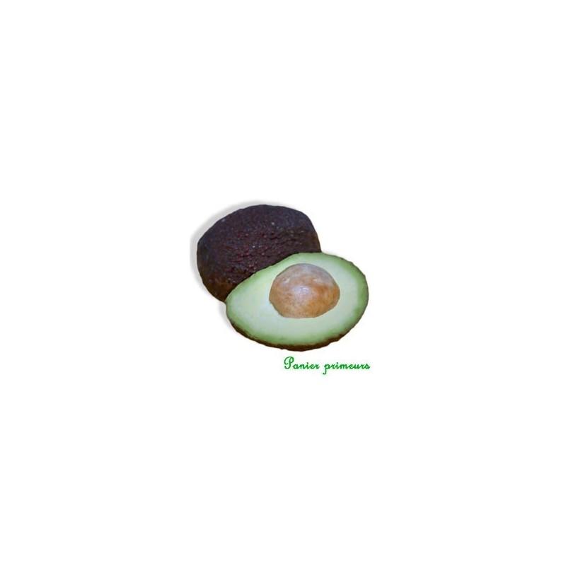 Avocats HASS (lot de 2)