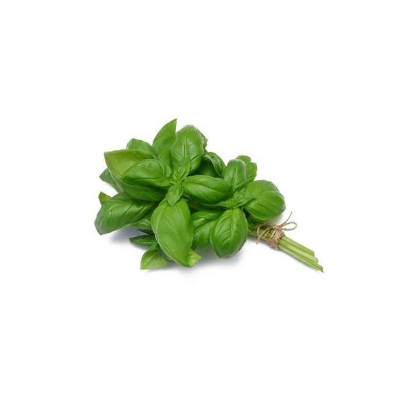 Basilic (la botte de 40g)