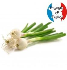 Oignons Blanc botte (la botte de 4)
